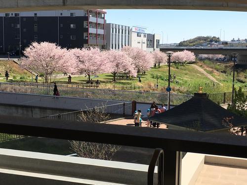 ベランダから桜.JPG